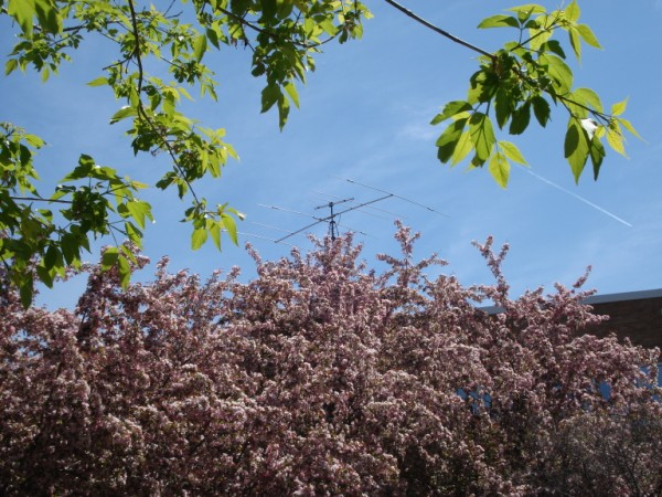 The antennas at Courage Center, with flowering crab trees in the foreground.
