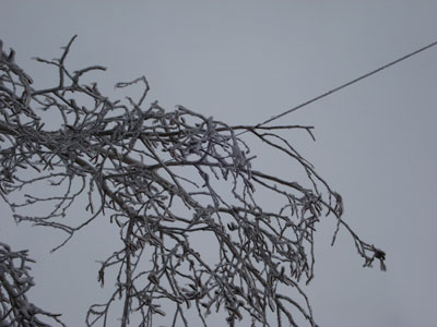 icy branches pulling on antenna wire